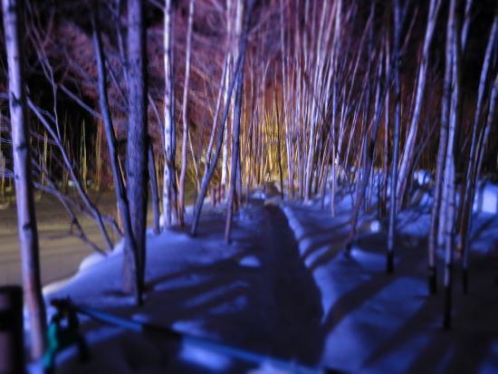 Auberge de Tefutefu: ライトアップされた青池周辺