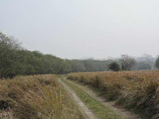 Bura-Chapori Wildlife Sanctuary