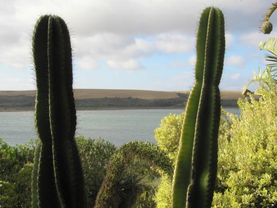 Mudlark River Front Lodge: More views