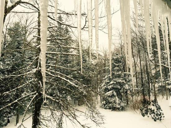 Snow Goose Inn : Snow Goose back yard