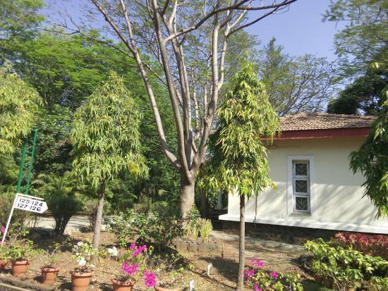 Dr Modi's Resort: Cottage amongst trees