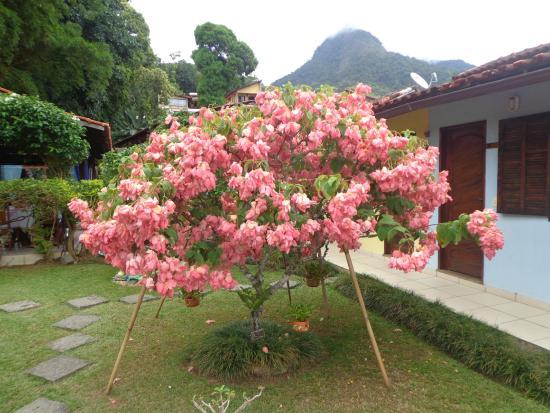 Pousada Cauca: Natureza