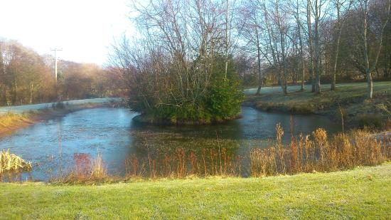 Ford Farm Lodges: The pond