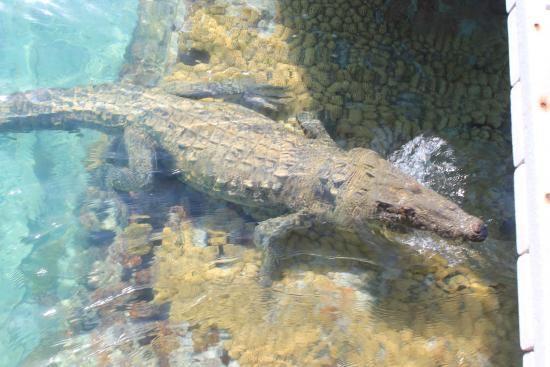 Carlos The Crocodile Picture Of Dry Tortugas National Park Key West Tripadvisor