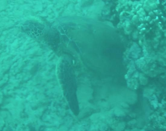 Aaron's Dive Shop: One of three turtles spotted