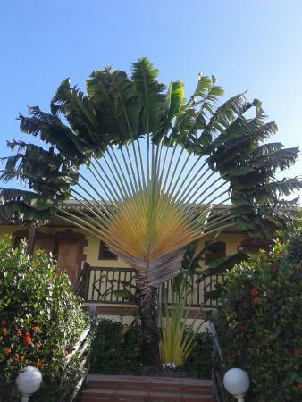 HOTEL CAP MACABOU: Le palmier des voyageurs