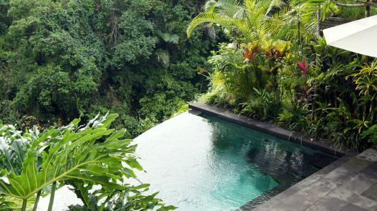 Private Infinity Pool Of Jepun Villa Picture Of Bidadari Private Villas Retreat Ubud Tripadvisor
