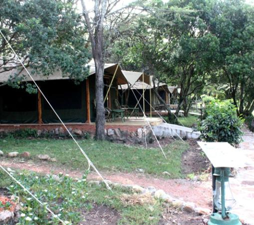 Mara Springs Safari Camp: Tents