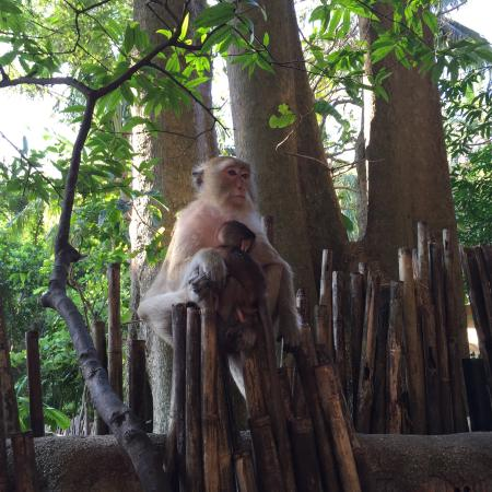 Monkeys By Phranang Picture Of Railay Bay Resort Spa