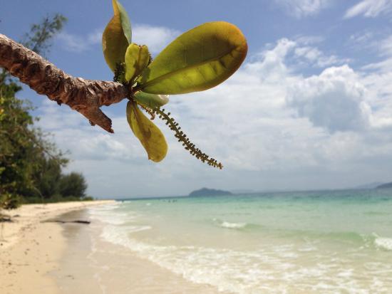 Pansand Resort Ko Bulon Lae: En kort bit bort från hotellet väntar paradiset
