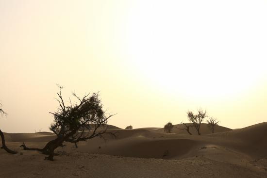 Emirates Tours and Safaris : Sunset