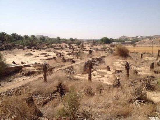 المدينة المنورة, المملكة العربية السعودية: Battle site of Badr