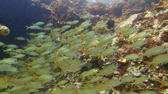 Hotel Le Panoramic: Sous l'eau de la mer