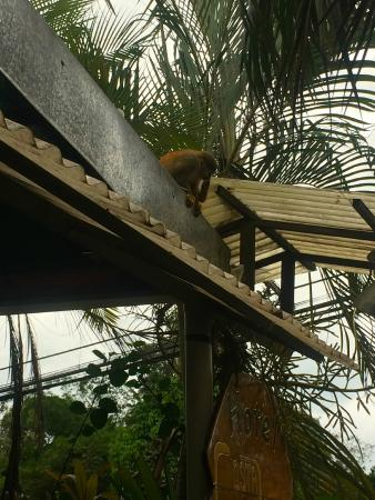 Backpackers Paradise Costa Linda: monkey friends