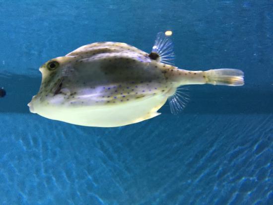 Jellyfish picture of monterey bay aquarium monterey for California freshwater fish