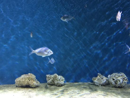 Fish Picture Of Monterey Bay Aquarium Monterey