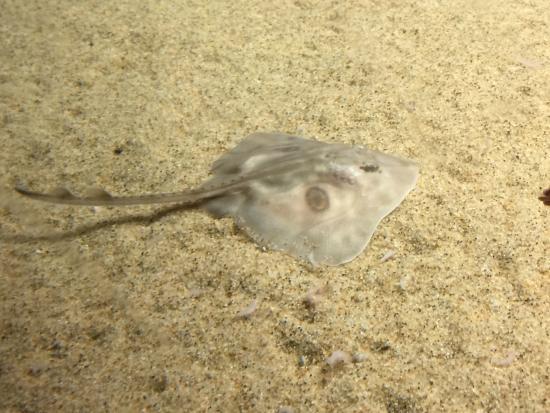 Fish picture of monterey bay aquarium monterey for California freshwater fish