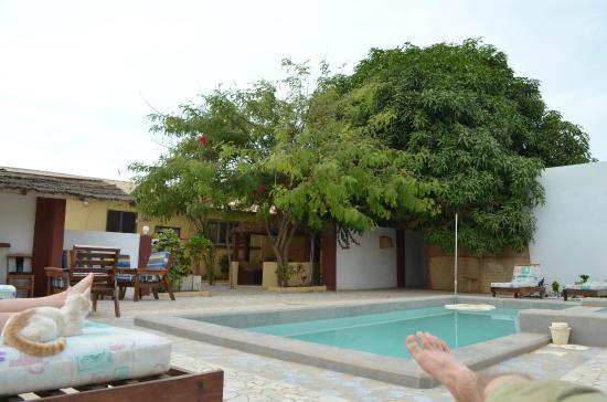 Mango Lodge: pool and lodge