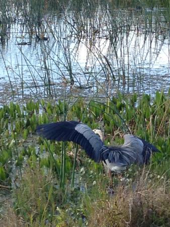 Ritch Grissom Memorial Wetlands : Dancing
