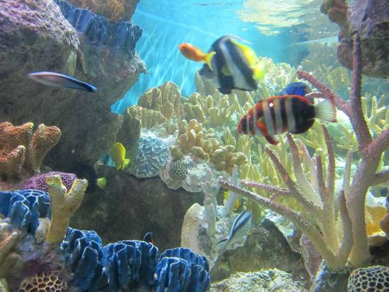 At Ne Aquarium Picture Of New England Aquarium Boston Tripadvisor