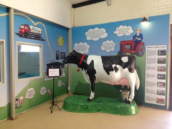 Muswellbrook, Australia: Come & milk Bessie the Cow
