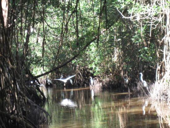 Everglades National Park Boat Tours: Mangroves