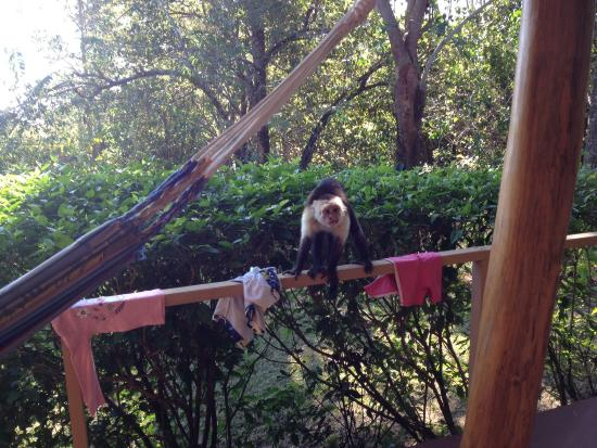 Agua Vista: Monkeys visited most mornings