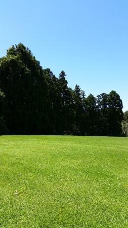 Kerikeri Park Lodge: The backyard