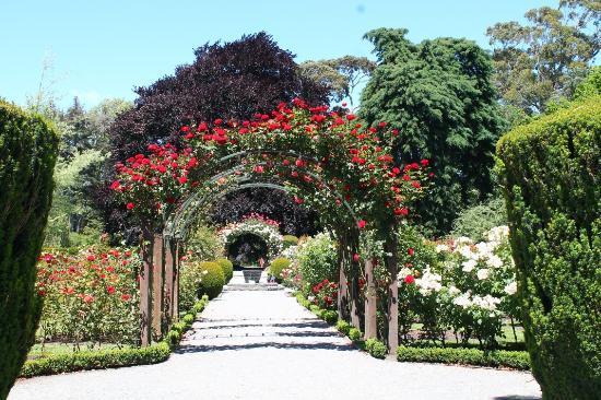 Central rose garden christchurch botanic gardens for Gardening services christchurch