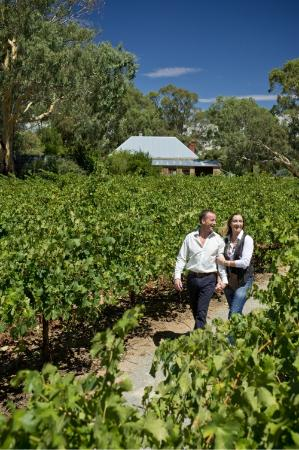 Mintaro, Australia: Meander through the Cabernet vines