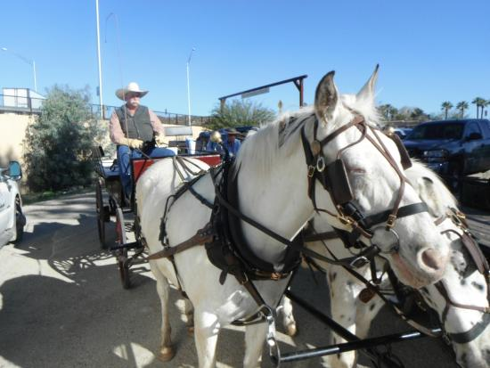 Lazy D Rockin P Ranch Carriage Rides: Dale Mee and his team of horses