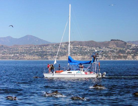 Dana Point, Kalifornia: Our original catamaran DolphinSafari surrounded by Dolphins