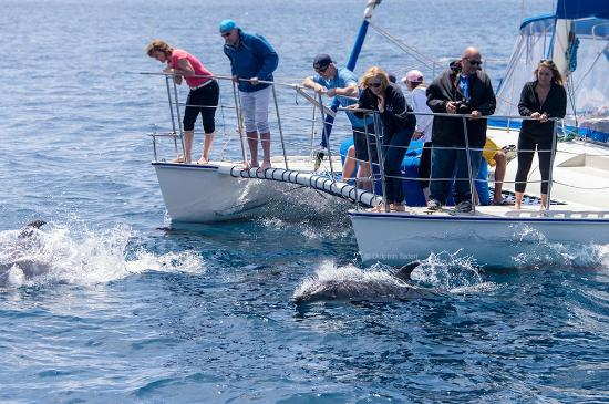 Dana Point, Kalifornia: Whale watchers aboard our original catamaran DolphinSafari get up close with Bottlenose Dolphin