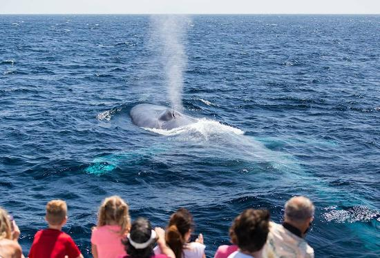 Dana Point, Καλιφόρνια: Up close and personal with a magnificent Blue Whale