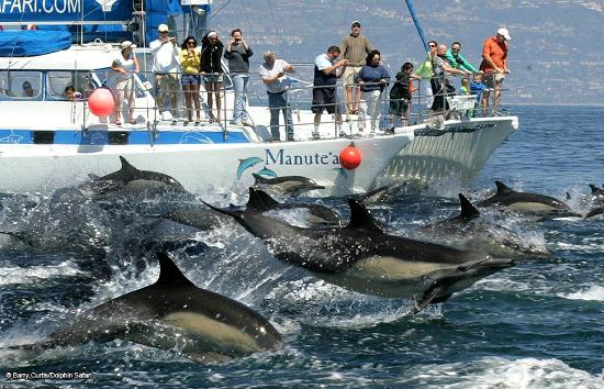 Dana Point, Californien: Our catamaran Manute'a and a Dolphin Stampede