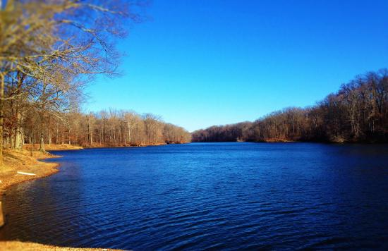 Meeman-Shelby Forest State Park: View of Poplar Tree Lake - Boat tours here
