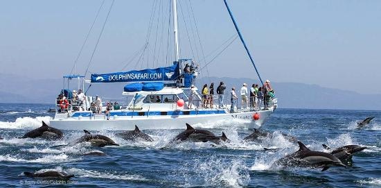 Capt. Dave's Dolphin & Whale Watching Safari: Our catamaran Manute'a and a Mega-pod of Dolphins