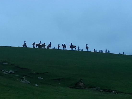 Speargrass Rise Bed and Breakfast : deer in fields closeby