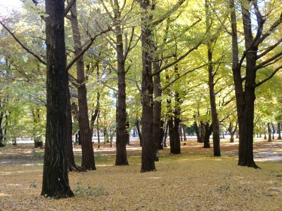 Nogawa Park : 野川
