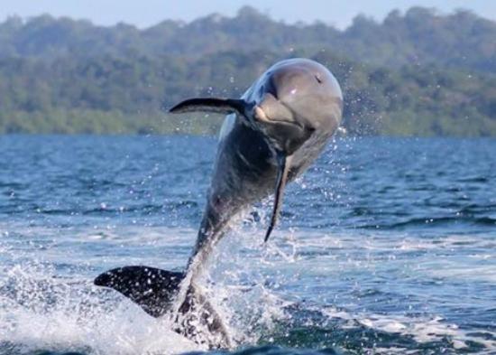 Dolphin Bay Hideaway: Dauphins dans la bay