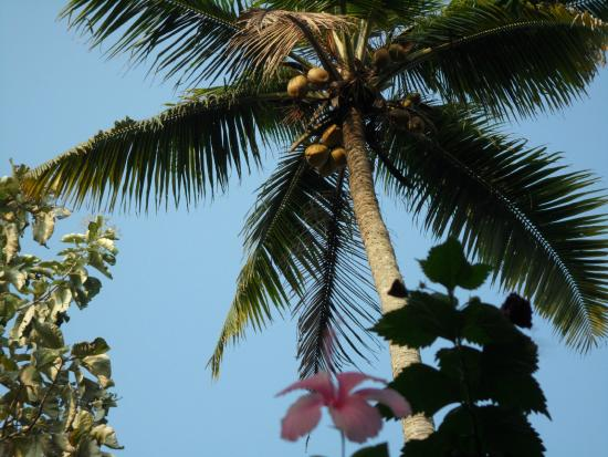 Mango Villa: 아름다운 정원,1