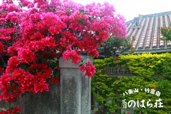 Minshuku Noharaso : 玄関周りは、ブーゲンビリアが素敵です。 全く同じ名前の民宿が竹富町内(西表島)にもあるので、わかりやすいように、宿の看板のロゴをコンポジットしました。 間違えやすいので注意してくださいね