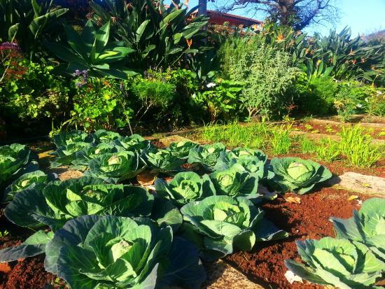 Vegetable garden from Quinta Splendida