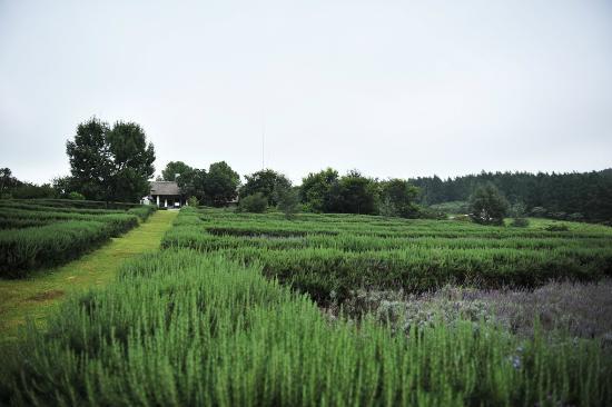Indigo Fields Farm House and Spa: Indigo Fields