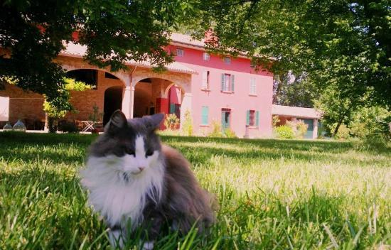 Podere Merlo Antico B&B ed Appartamento con Cucina in Parma
