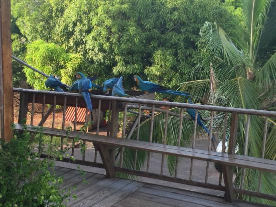 Hacienda del Mar: guacamayas