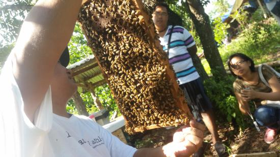 Lipa City, Filippinerne: honey at Milea Bee Farm