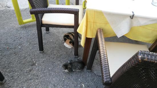 Apokoronas, Griechenland: Гости пришли
