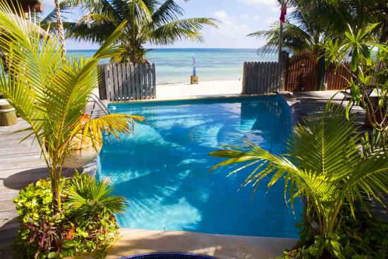 Puerto Morelos Diving Lodge : Our pool right on the beach.