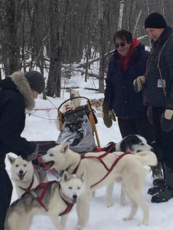 Wolfsong Adventures in Mushing: Getting the dogs harnessed